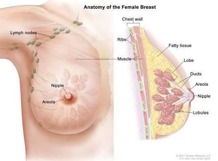do men produce breast milk